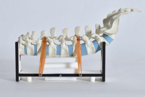 Spine Holder Univeral