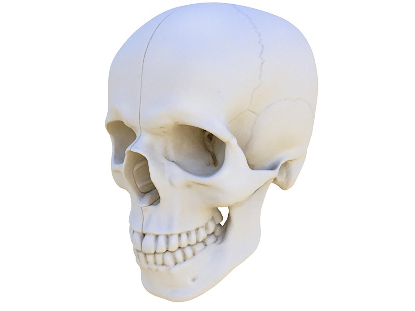 Skull Animation 2