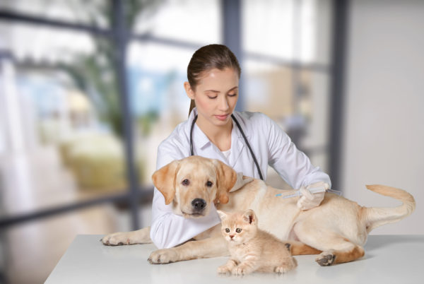 Veterinary with Cat and Dog