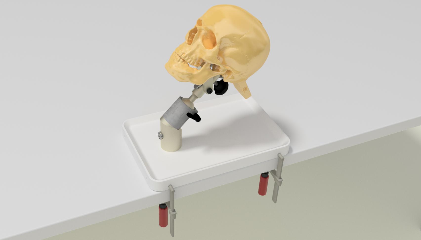 Skull Holder System with Skull